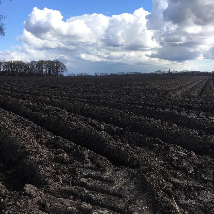 Drenthe ploughed field