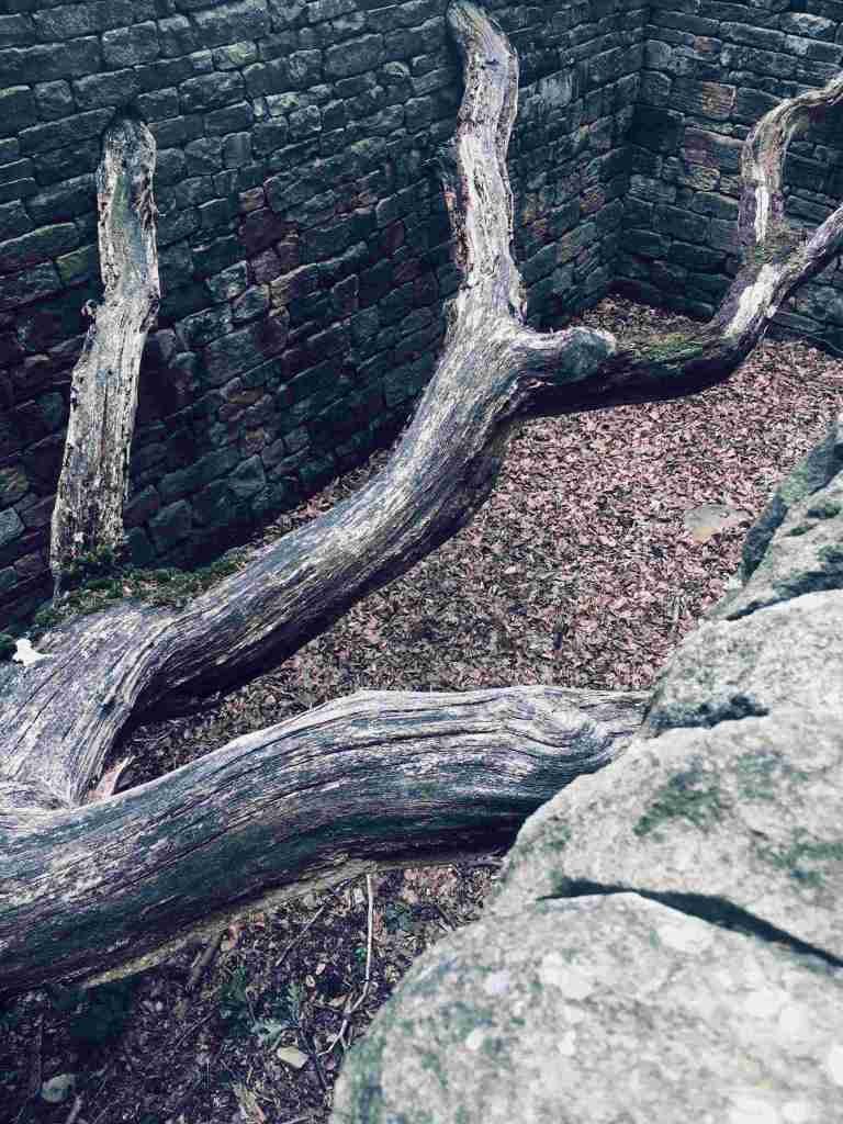 Andy Goldsworthy at YSP